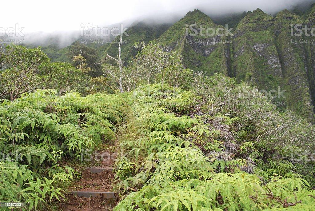Hiking Trail in Hawaii Islands royalty-free stock photo