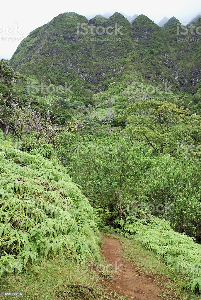 Hiking Trail in Hawaii royalty-free stock photo