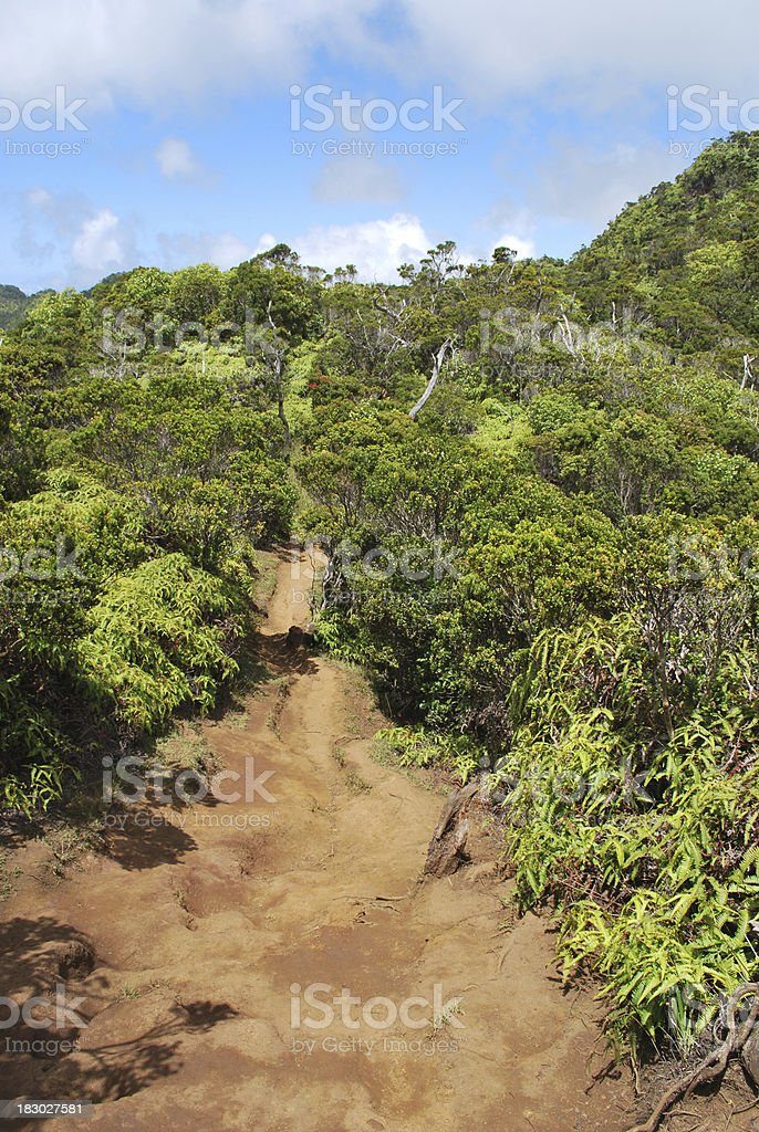 Hiking Trail in Kauai, Hawaii. stock photo