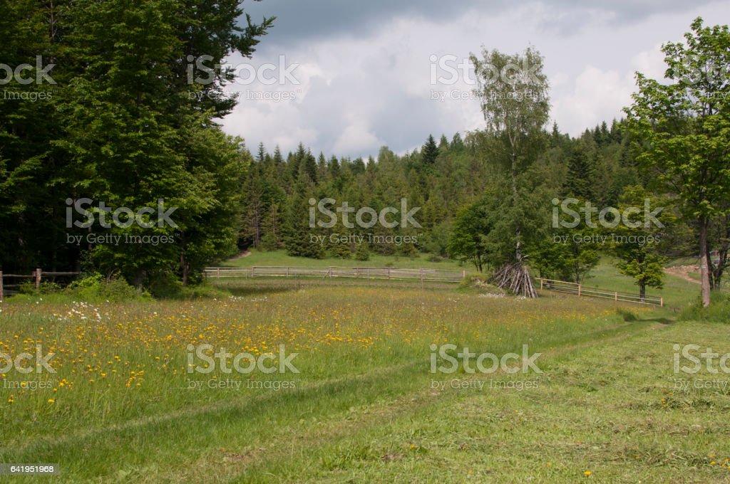 Hiking trail in mountain stock photo