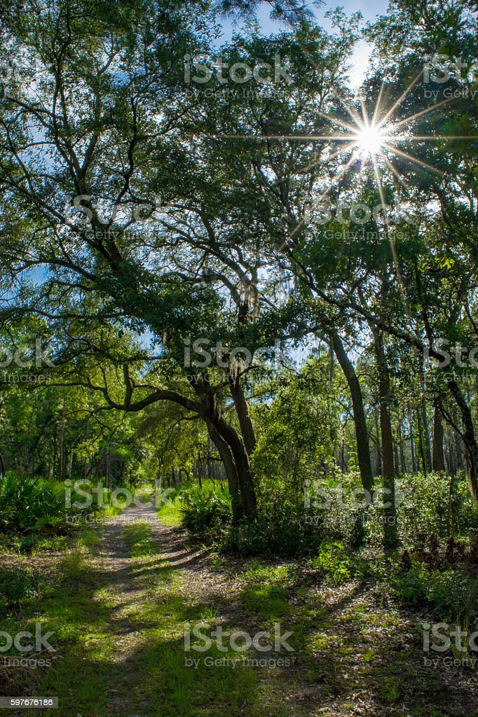 Hiking Trail in Oacla National Forest stock photo