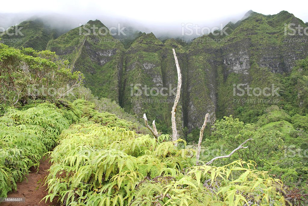Hiking Trail in Oahu, Hawaii royalty-free stock photo
