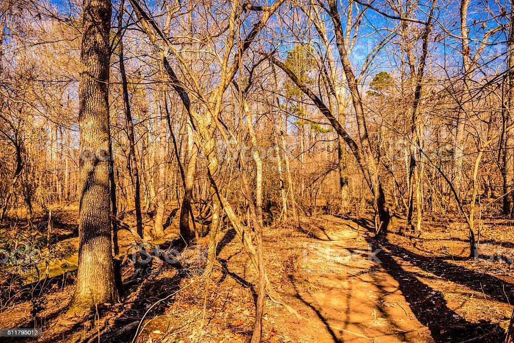 Hiking trail in the woods of Eno River stock photo