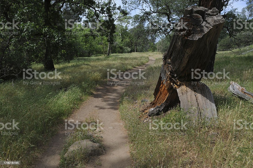 Hiking Trail in the Woods royalty-free stock photo