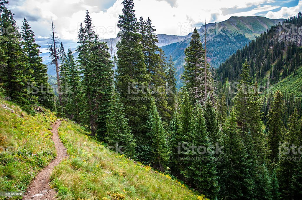 Hiking Trail Leading into the Rocky Mountain Forest stock photo