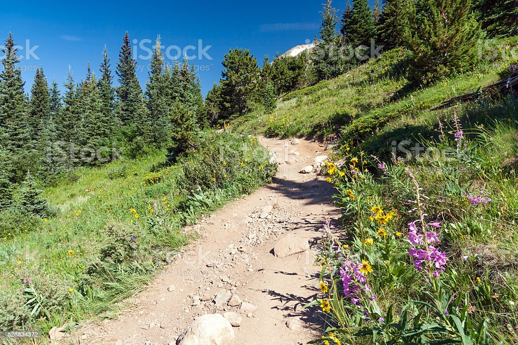 Hiking Trail through field of wildflowers in Colorado stock photo