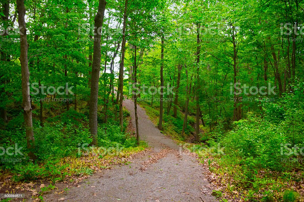 Hiking Trail through Spring Woods royalty-free stock photo