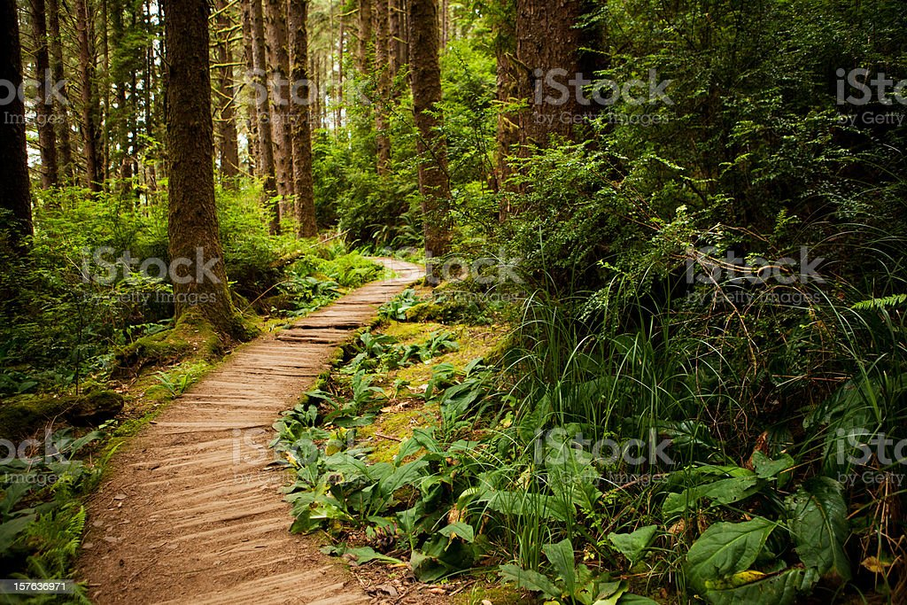 Hiking trail through the redwoods stock photo