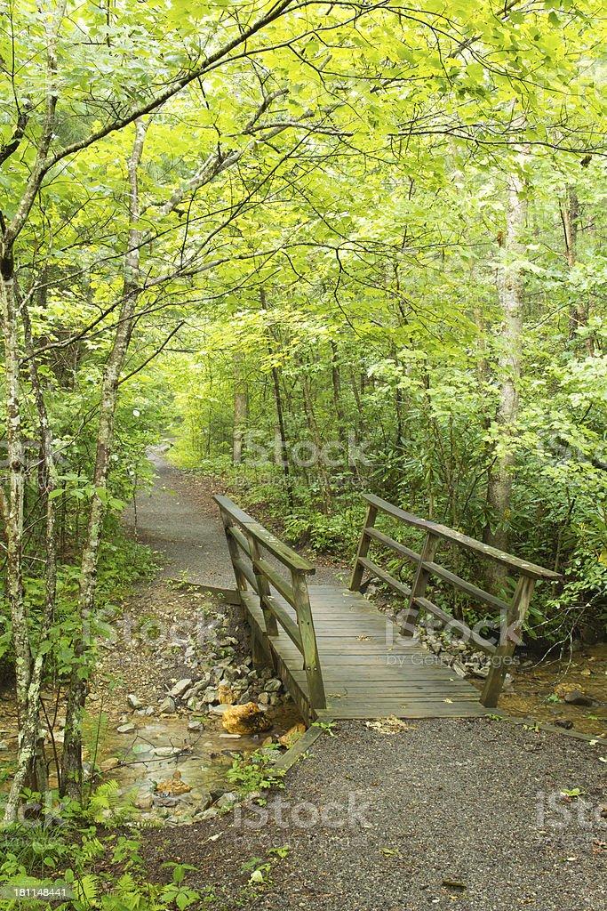 Hiking Trail Through Woods stock photo