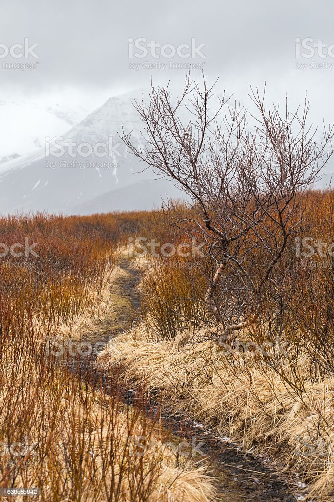 Hiking trail winding through wet shrubs and trees in Skaftafell stock photo