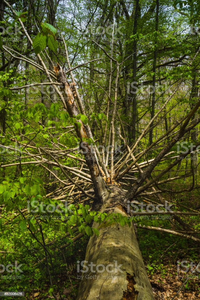 Hiking trip in Ostelsheim, in the black forrest on a cloudy day in early spring stock photo