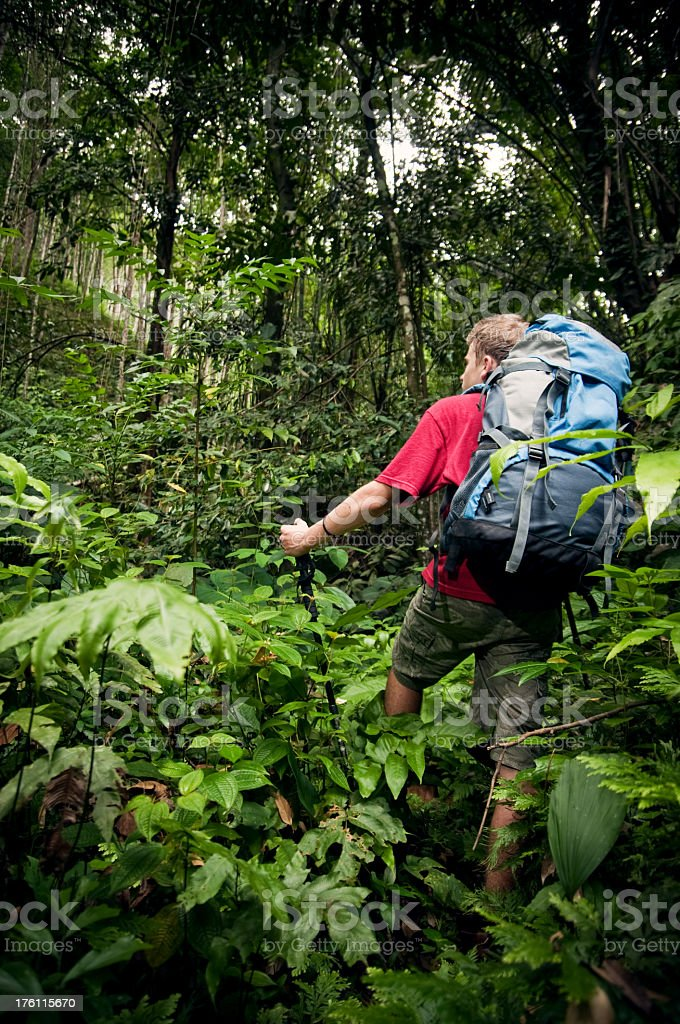 Hiking up a hill in the jungle. royalty-free stock photo