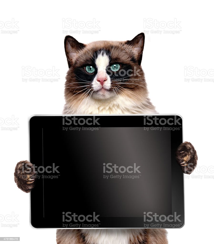 A hilarious cat holding a black screened tablet stock photo