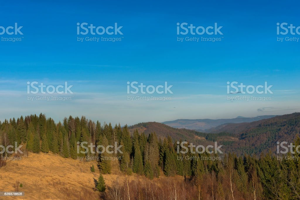 Hill covered forest stock photo
