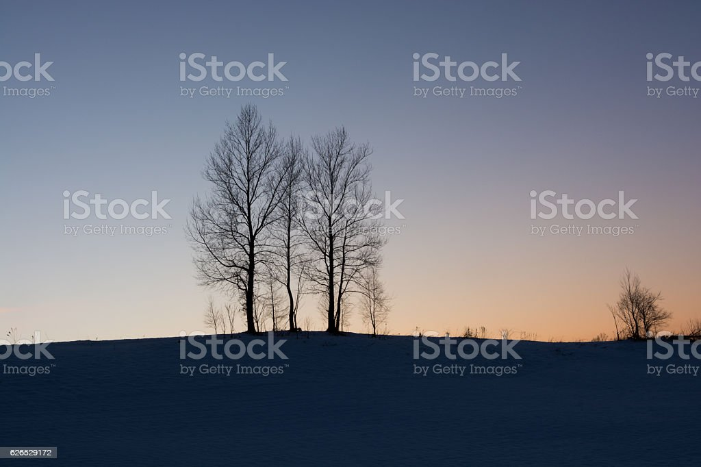 Hill of dusk  and three  winter trees stock photo