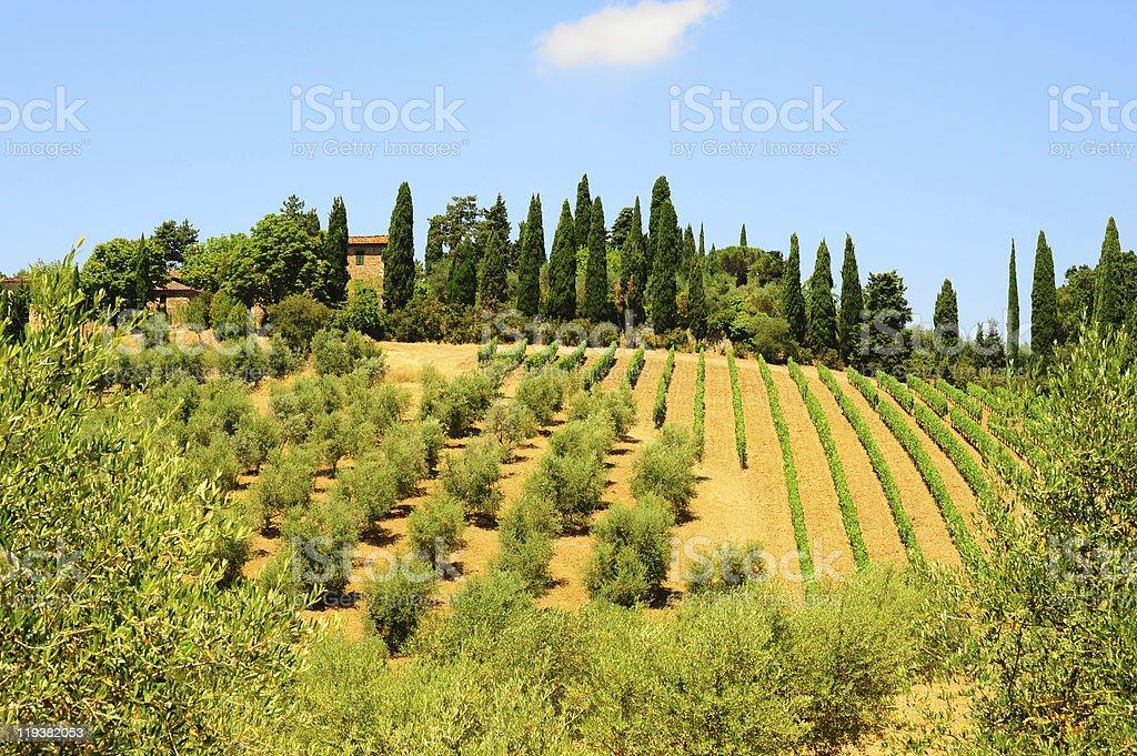 Hill Of Tuscany royalty-free stock photo