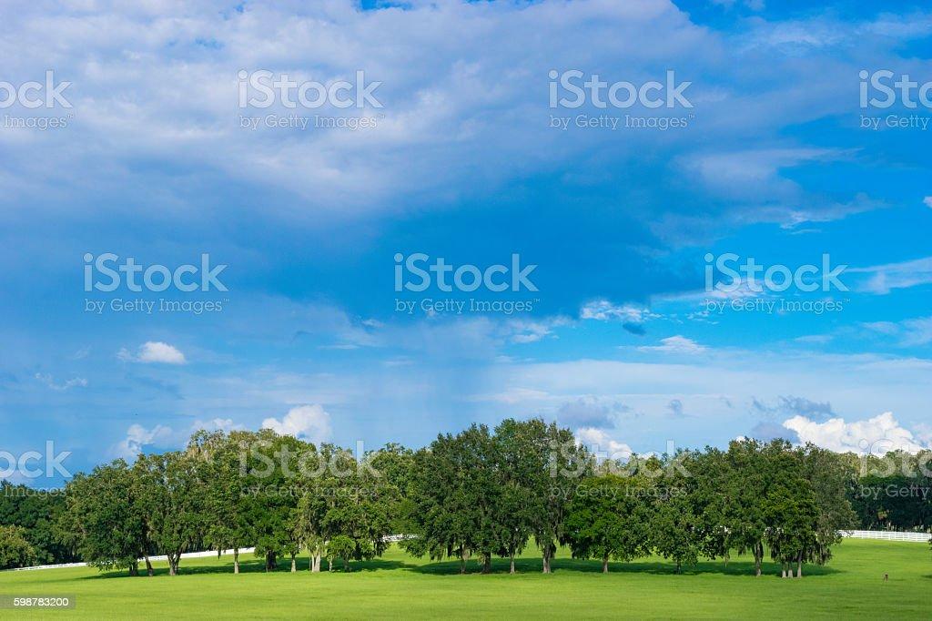 Hill on a Farm in Ocala, Florida stock photo