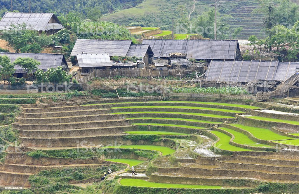 Hill tribe rice terraced fields royalty-free stock photo