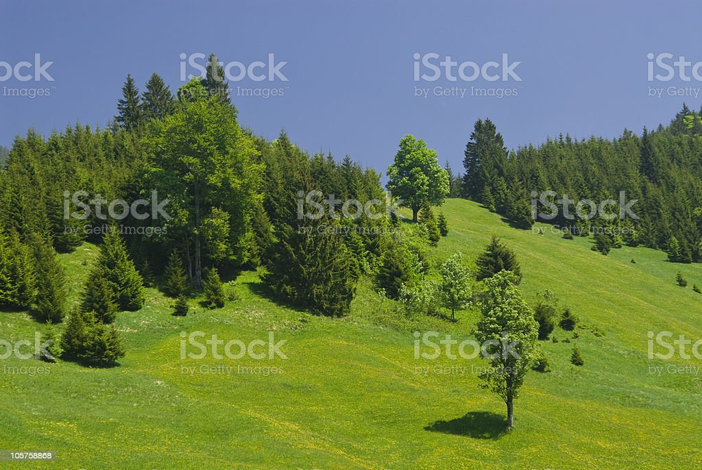 Hill with forest and fields royalty-free stock photo