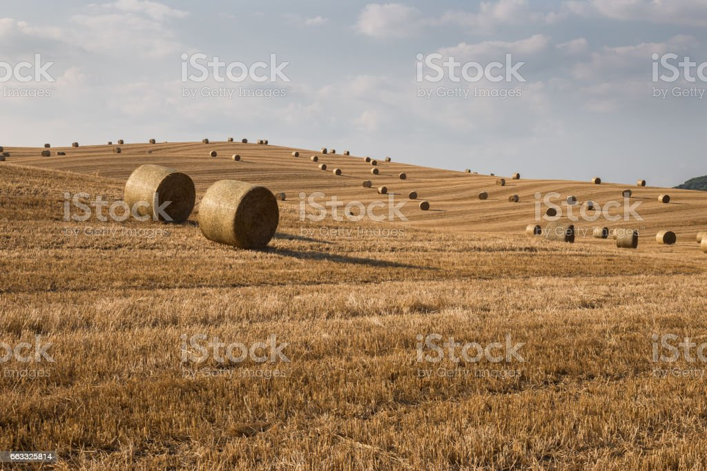 Hill with haybales stock photo