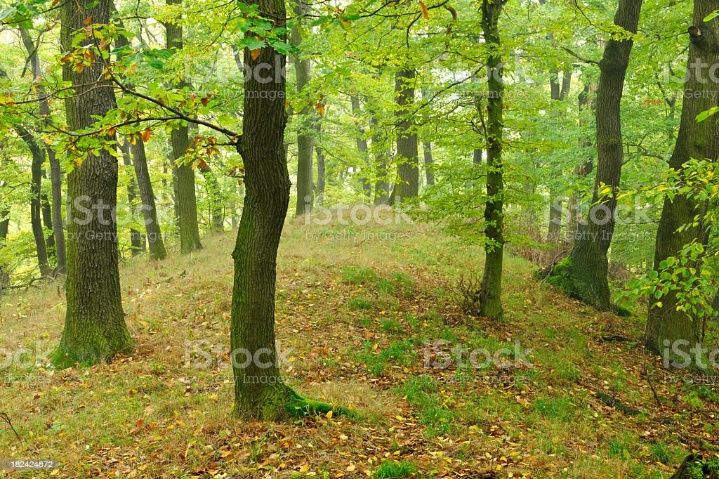 Hill with Oak Tree Forest in Early Autumn royalty-free stock photo