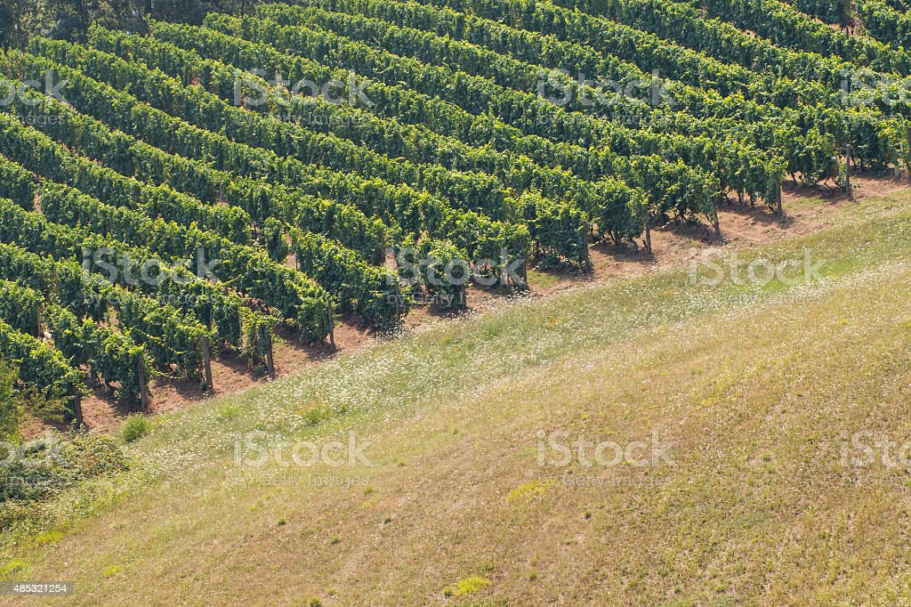hill with vineyard and flower field stock photo
