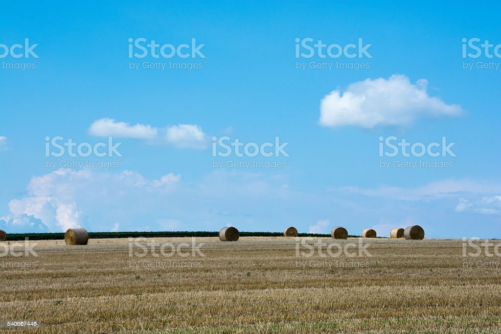 Hill with wheat roll stock photo