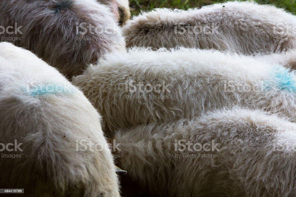 Hiller bunch of sheep wool stock photo