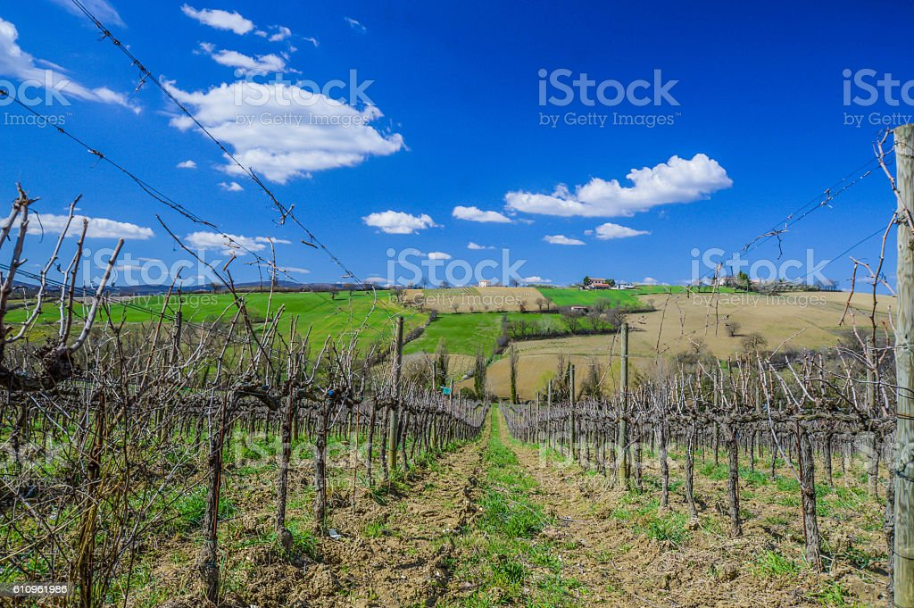 Hills and grapevines, Umbria, Italy stock photo