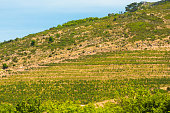 Hills around Stellenbosch