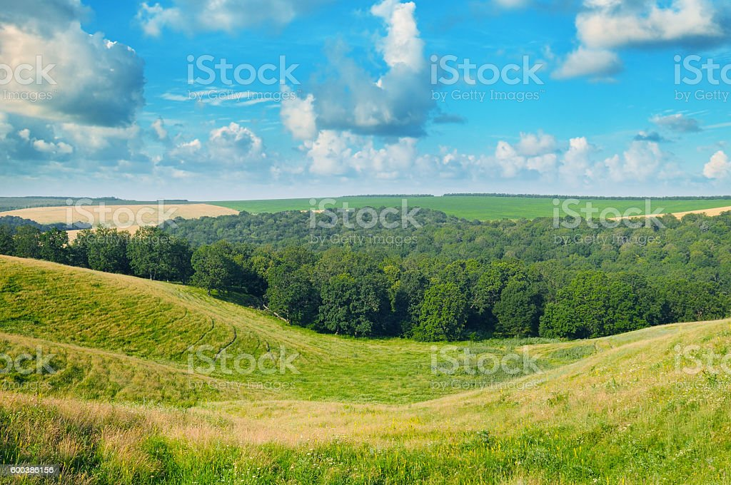 hills, forest and blue sky stock photo