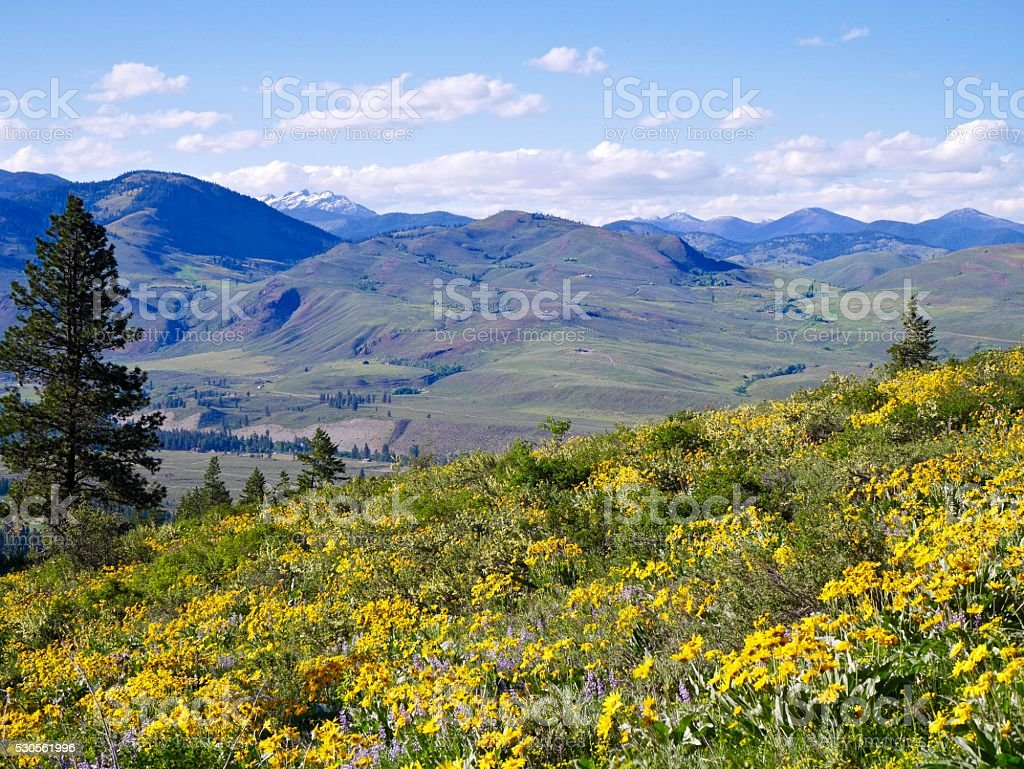 HIlls, Meadows, Flowers, Mountains, Clouds. stock photo
