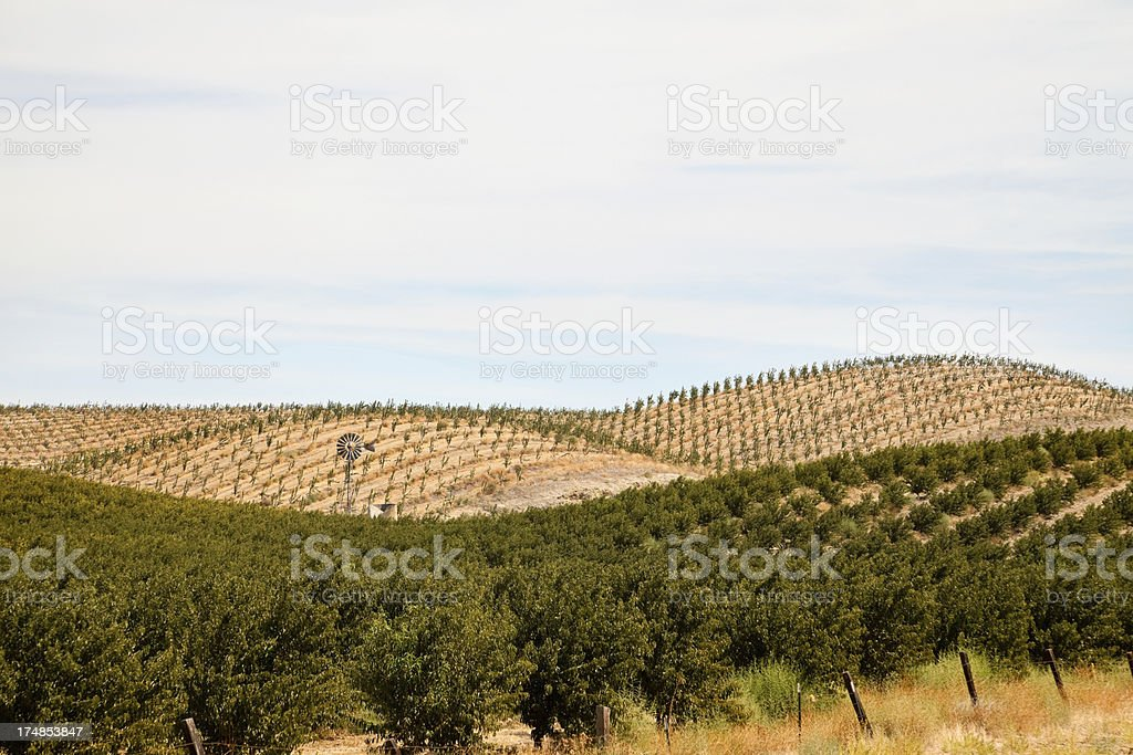 Hills of Peach and Apricot Orchards with Windmill, in California stock photo