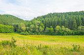 Hills of the Eifel National Park in summer