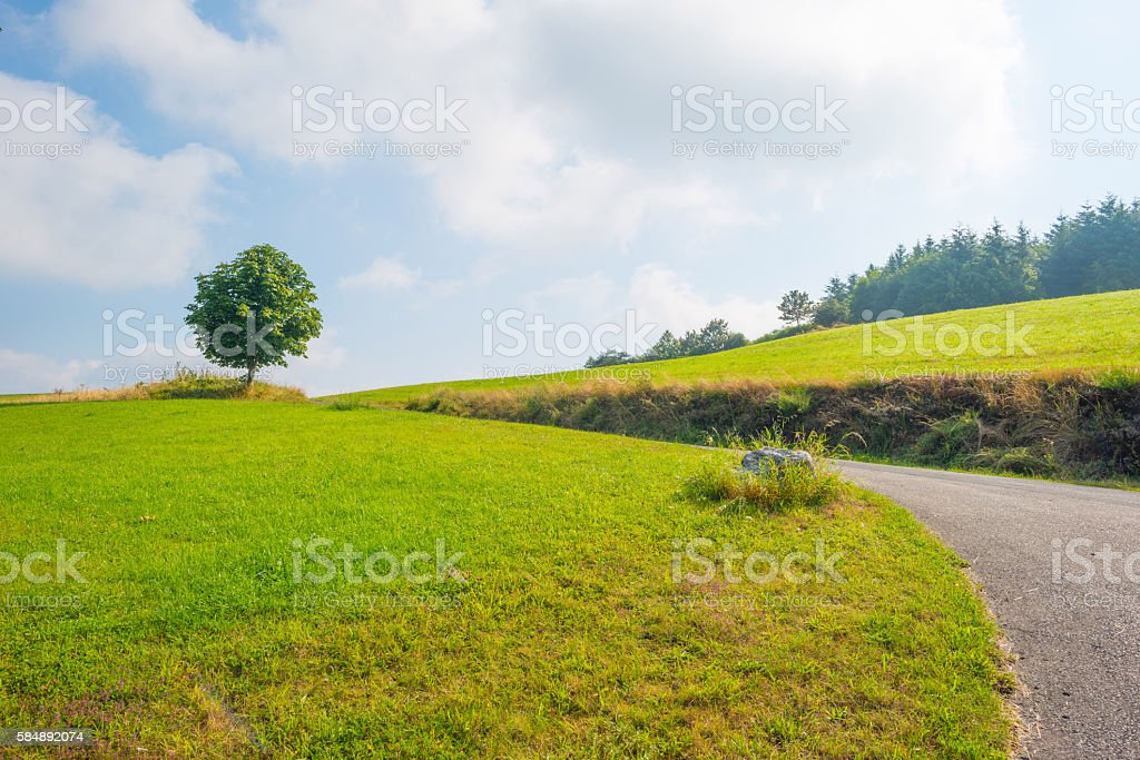 Hills of the Eifel National Park in summer stock photo