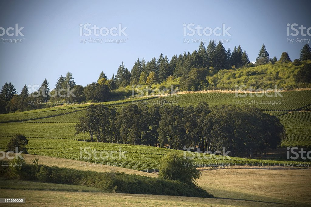 Hills of the Willamette Valley vineyards stock photo