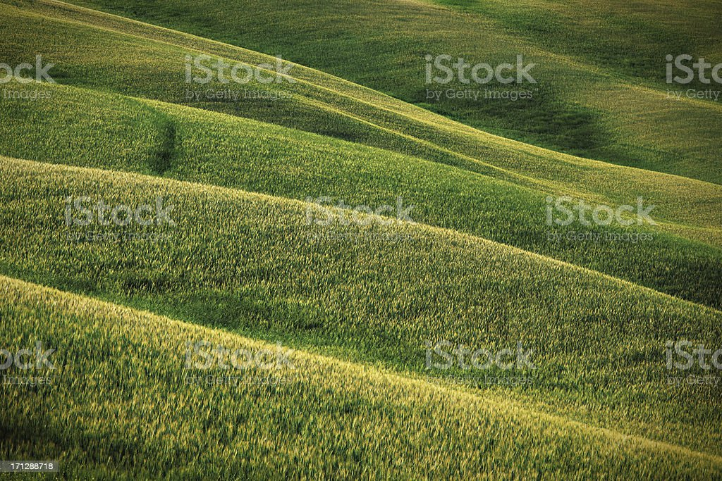 Hills of Tuscany royalty-free stock photo