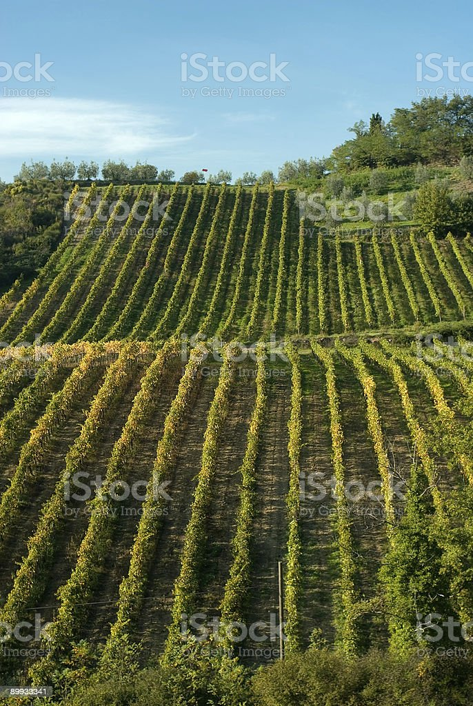 Hills of Tuscany royalty-free stock photo