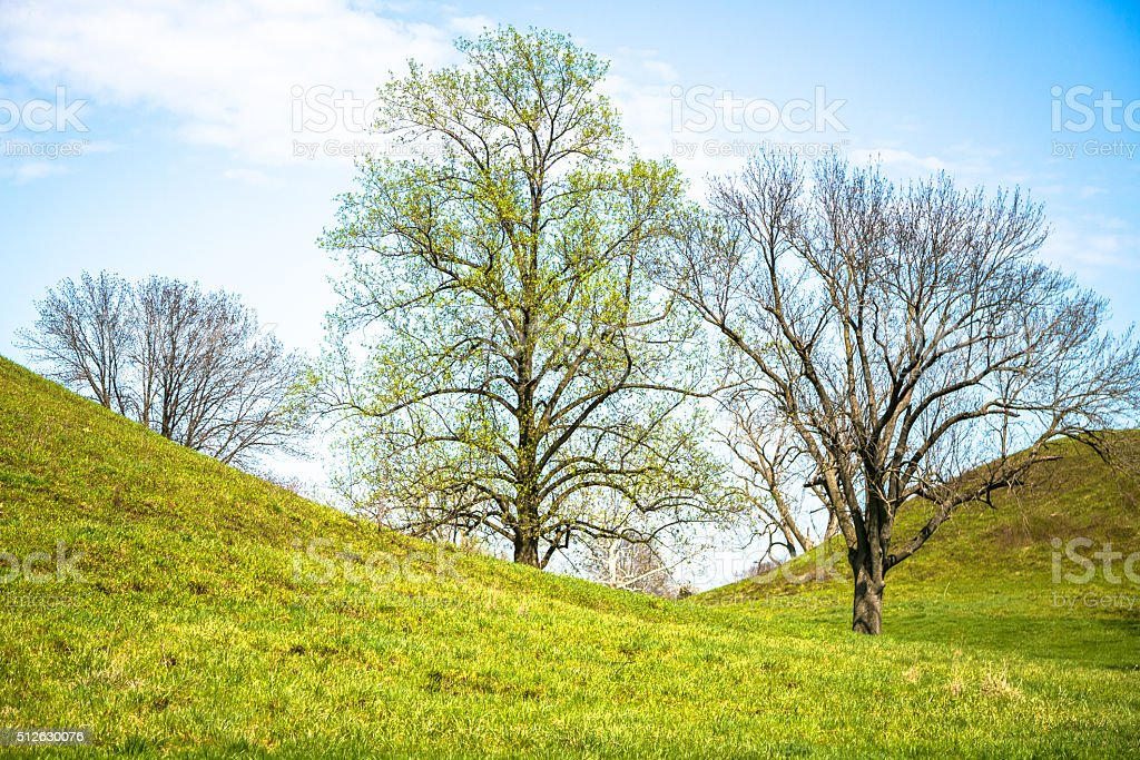 Hills, Trees and Springtime stock photo