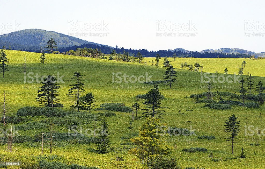 Hills with bamboo royalty-free stock photo