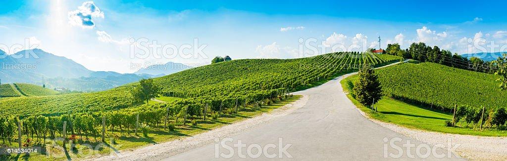 Hills with vineyard stock photo