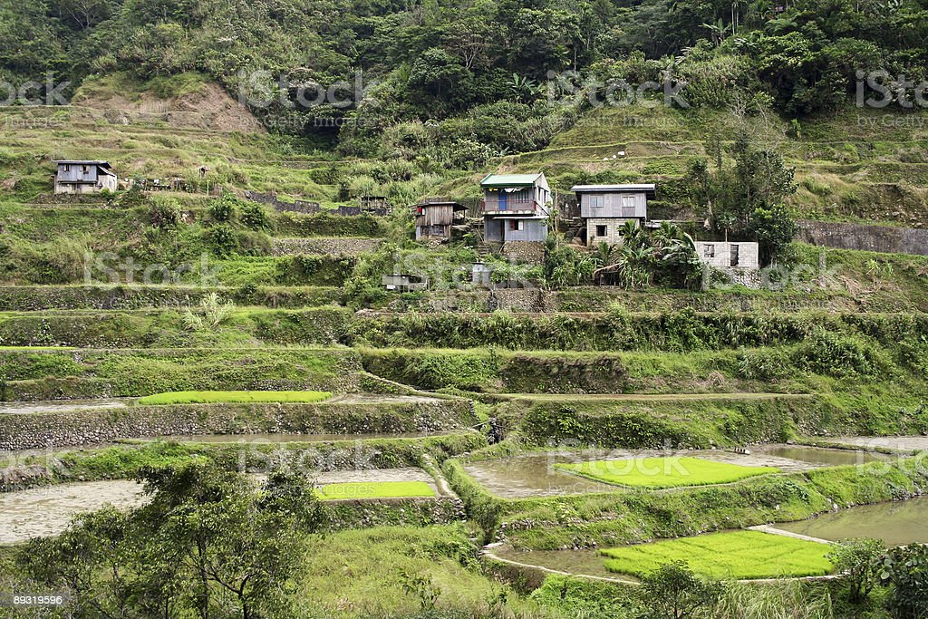 hillside homes rice terraces royalty-free stock photo