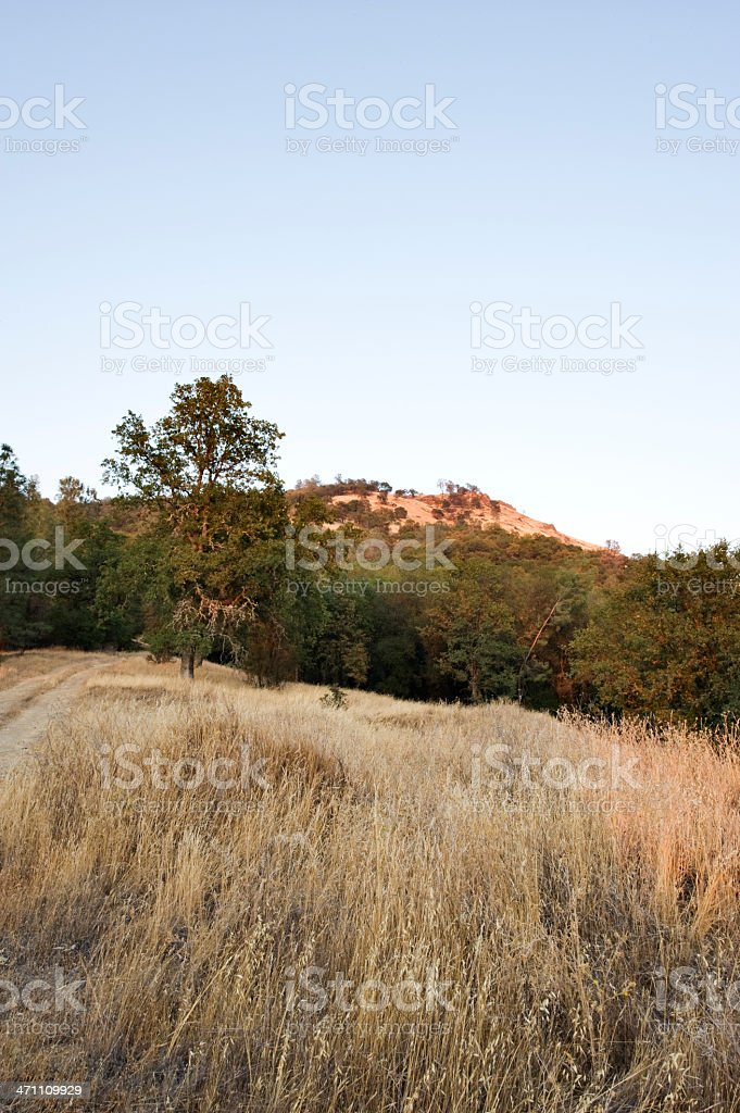 Hillside in Summer royalty-free stock photo
