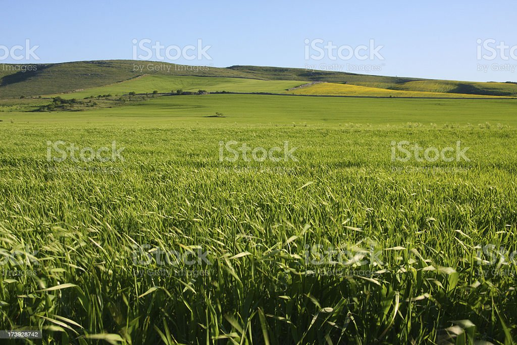 Hillside in the Murge National Park, Apulia, Italy royalty-free stock photo