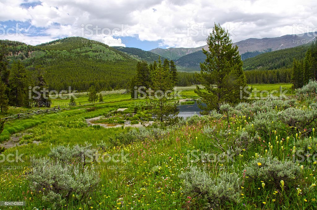 Hillside of Wildflowers in the Mountains of Colorado stock photo