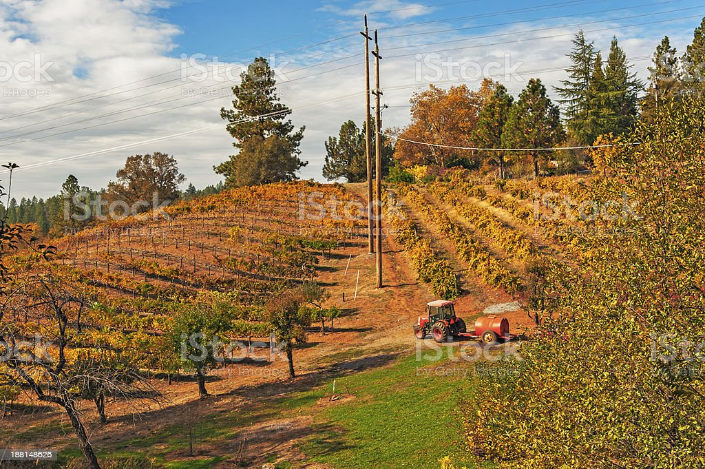 Hillside Vineyard and Tractor stock photo