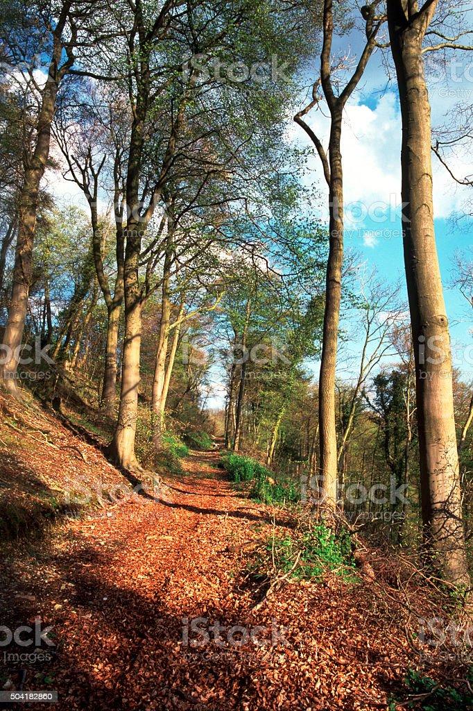 Hillside woodland footpath stock photo