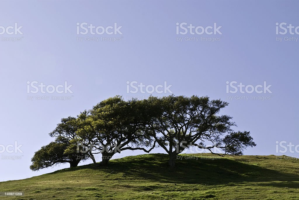 Hilltop Oaks stock photo