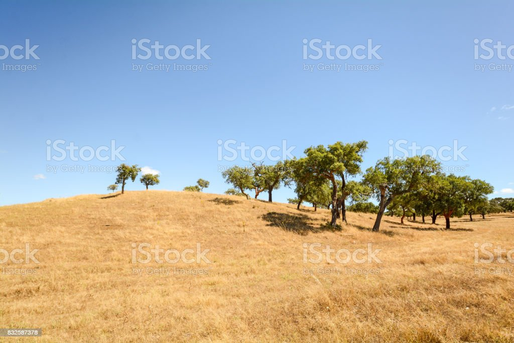 Hilly Alentejo landscape with cork oak trees and yellow fields in late summer near Beja, Portugal Europe stock photo