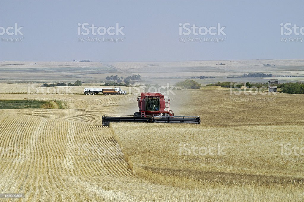 Hilly Harvesting royalty-free stock photo